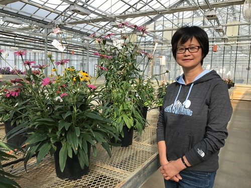 nping Ren, Senior Plant Breeder at Ball Horticultural / Pan American Seed / Kieft Seeds